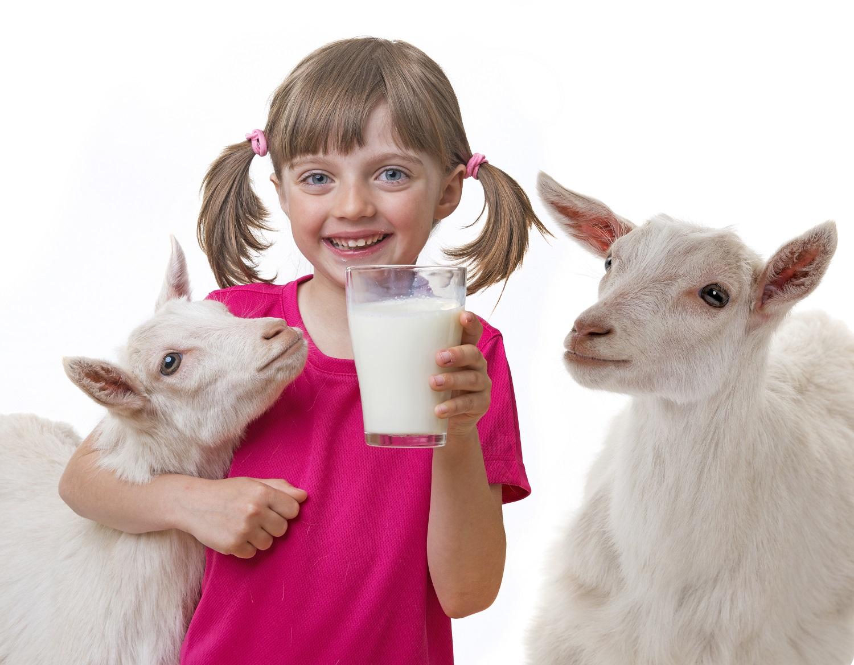 Sveikatos lobynas: gydomosios ožkų pieno savybės