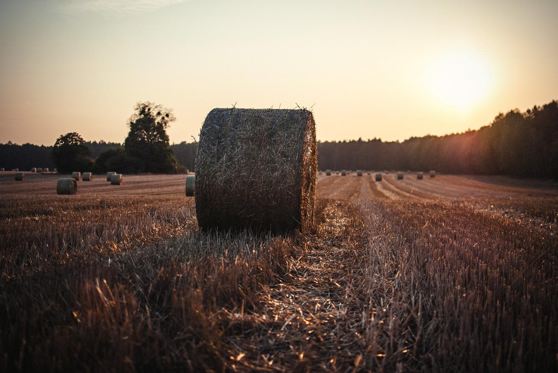 Lietuvos ūkininkai nežinioje: ar sėti šiais metais pluoštines kanapes?