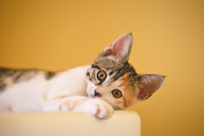 Kaip pasirūpinti gyvūnais, jei susirgsite COVID-19?
