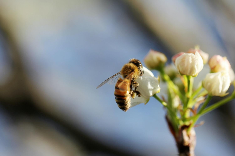 Tvirtas bičių valstybės pamatas