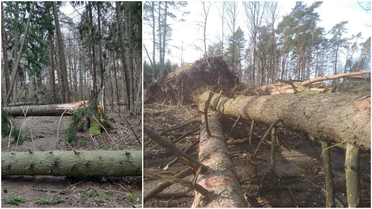 Stipriausios audros Lietuvoje: negaili nei gamtos, nei žmogaus