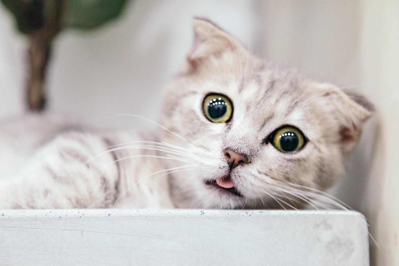 Kačių agresija – ar įmanoma to išvengti?