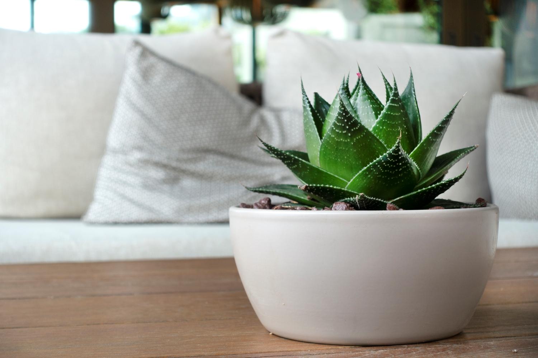 Ypatingi augalai: švarus ir drėgnas kambario oras be papildomų pastangų