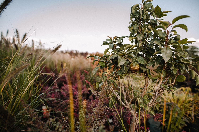 Vaismedžių sodinimas rudenį: ką verta žinoti?