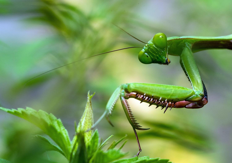 10 evoliucijos keistenybių: nuo suledėjančių vabzdžių iki nemirtingų drebučių