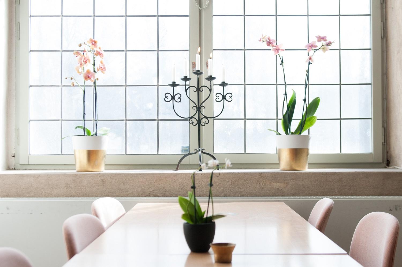 Dovana – kambarinis augalas