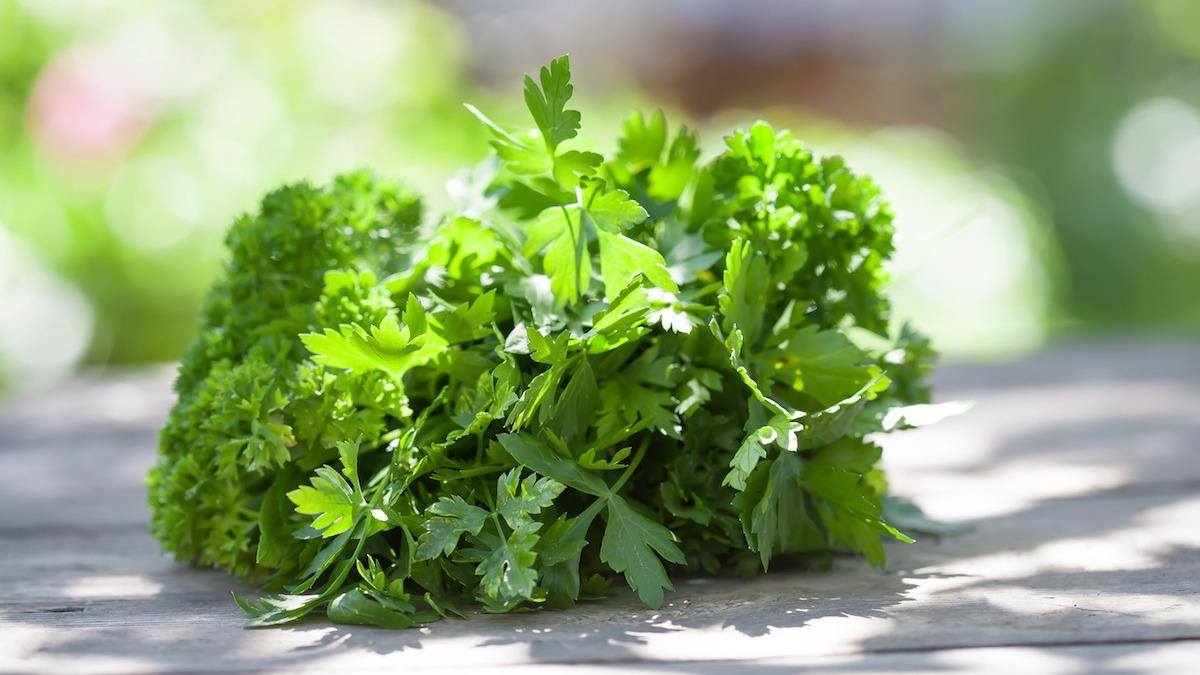 Vaistiniai augalai diuretikai