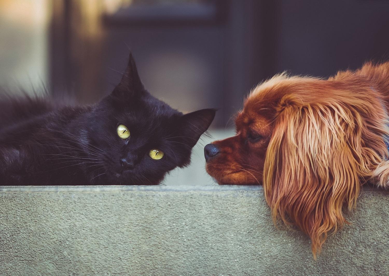 Augintinių kūno kalbos skirtumai: kodėl šuo ir katė nesutaria?