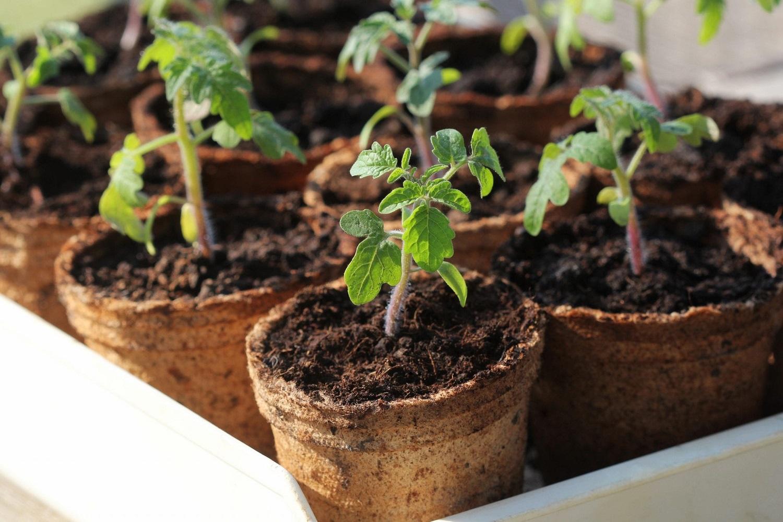 Daigų auginimas: paklusti gamtai ar aktyviai jai padėti?