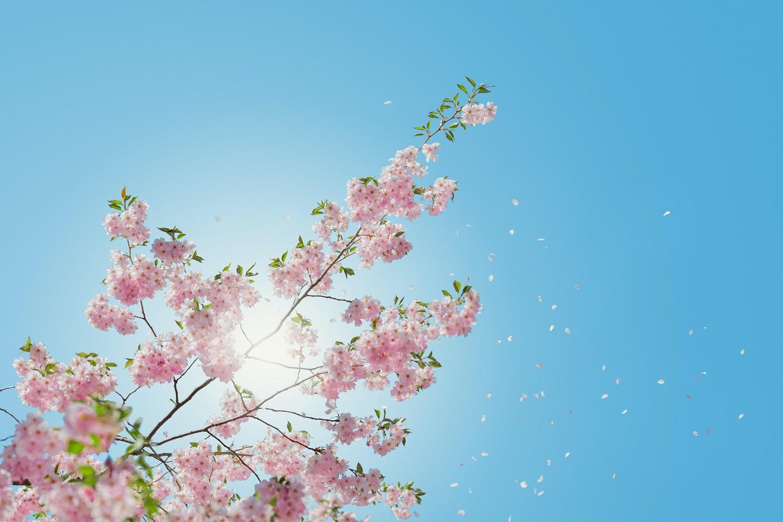 Ar pavasario saulė gali užtikrinti reikalingą vitamino D kiekį?