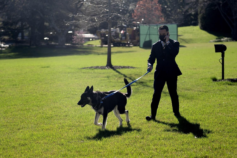 """J. Bideno augintinis bus mokomas, kaip dera elgtis """"pirmajam šuniui"""""""