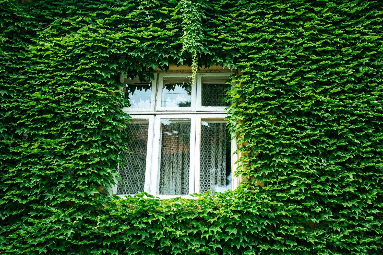 """Kodėl """"žalieji"""" namai greitai taps naująja norma"""