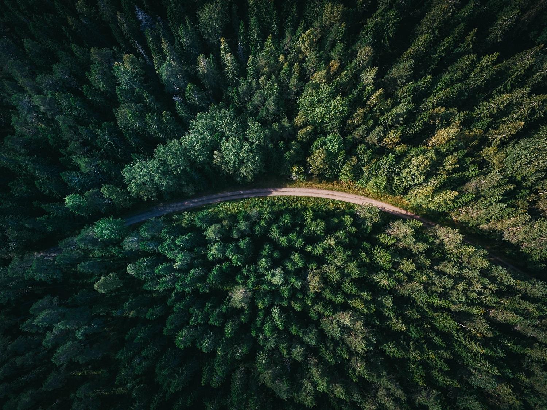 Ko galima pasimokyti iš skandinavų apie miško vertės auginimą
