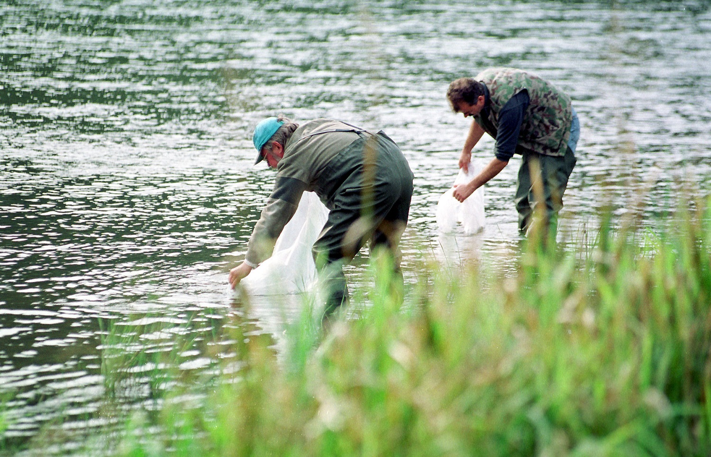 Vilniuje į Neries upę paleista 2 tūkst. ypač retų žuvų – ūsorių