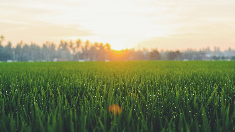 Sodininkystės ekspertai: nepriekaištingos vejos paslaptis paprasta – dažnas pjovimas