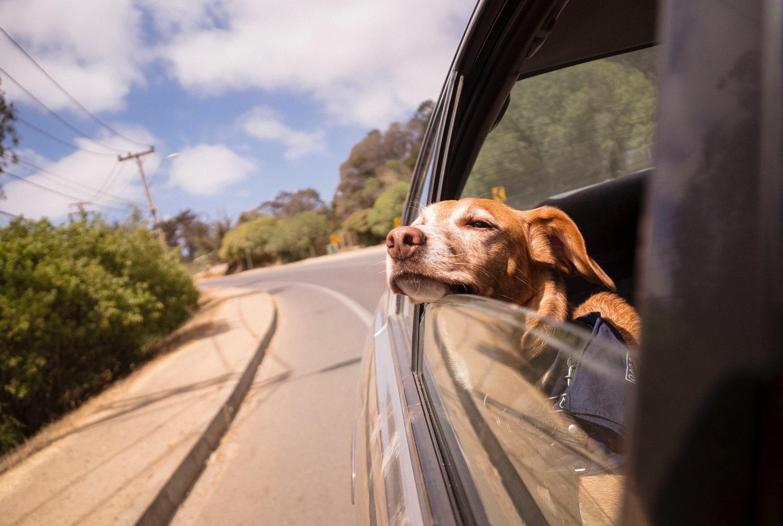 Vasaros kelionės automobiliu: ką verta žinoti išvykstant su augintiniais?