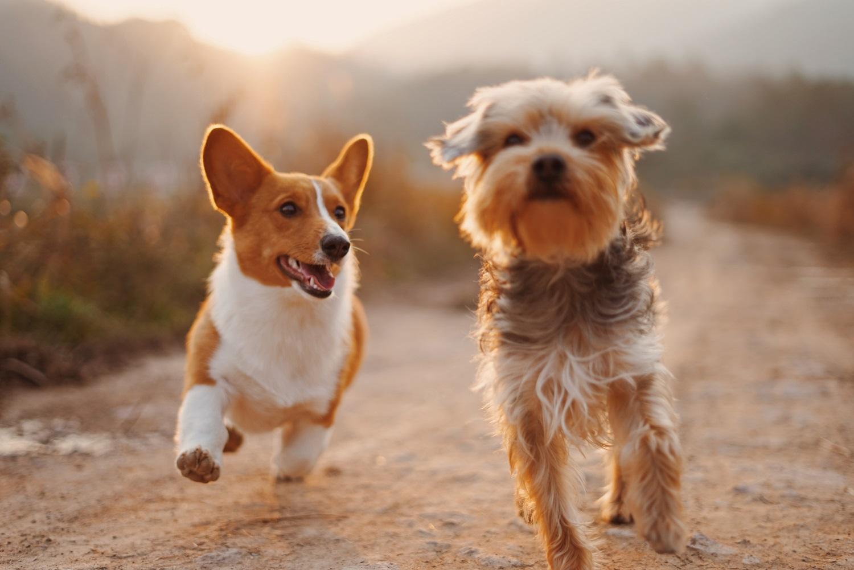 Mokslininkai ieško naujų pagalbos metodų vienišiems: galima išeitis – šunų terapija