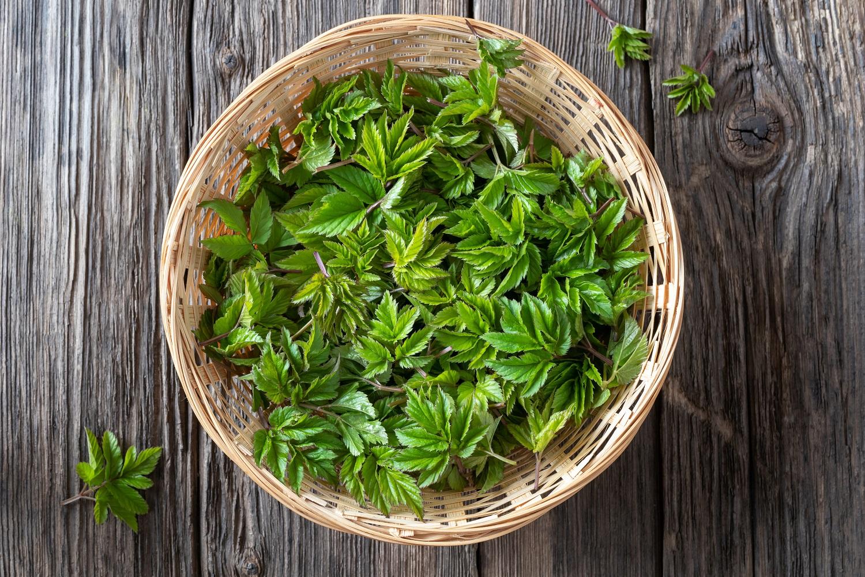 Garšvos – ne tik įkyrios piktžolės