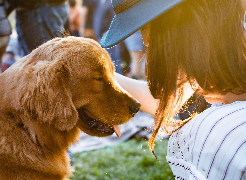 Žmonių ir šunų etiketo ABC: ar galima glostyti svetimus gyvūnus ir kaip tai daryti saugiai?
