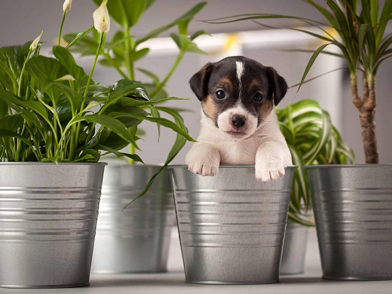 Padėkite – šuo graužia vaiskrūmius ir gėles