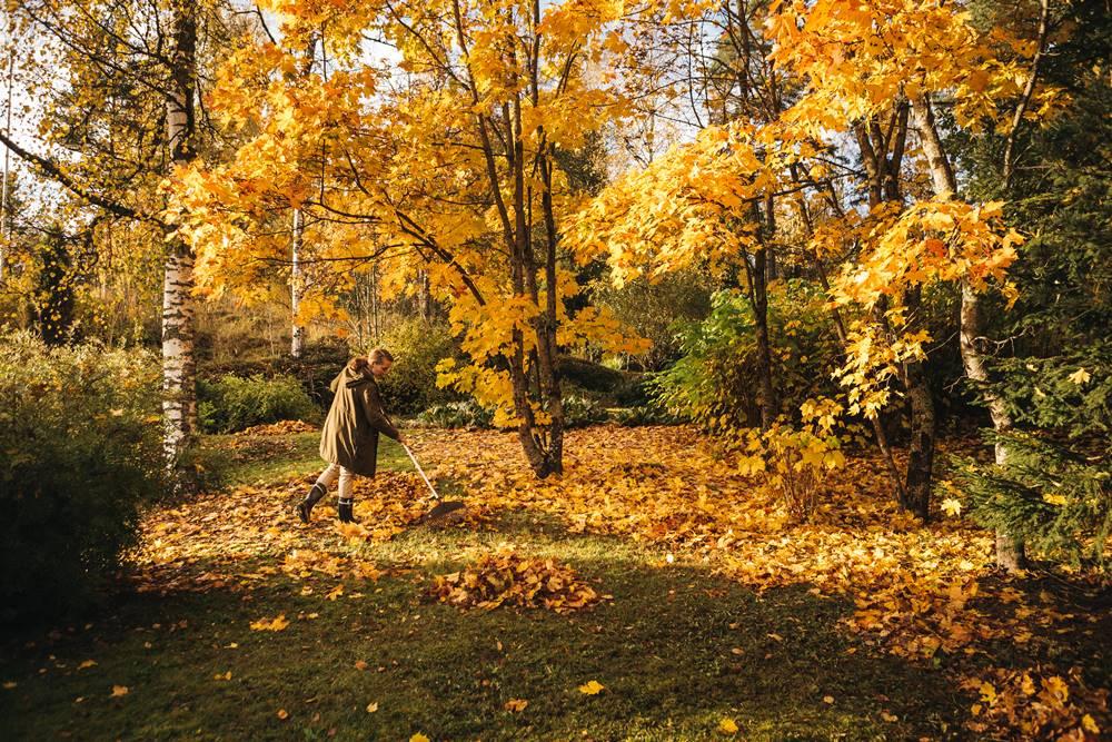 Ieškote naujų meditacijos būdų? Išmėginkite lapų grėbimą